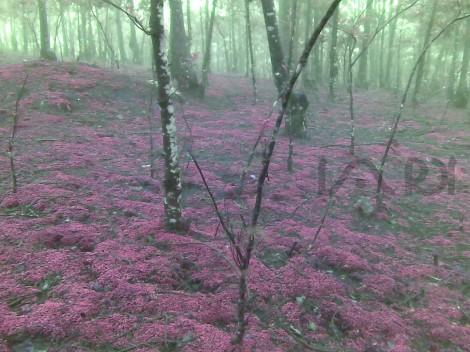 Kaikatty Forest